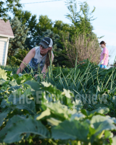 Justine Meis, home from college, is shown helping weed the garden. E-R photo