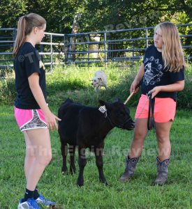 Marie Meis (l) gives some pointers on showing bucket calves to Allison Selting (r). The Elgin Review.